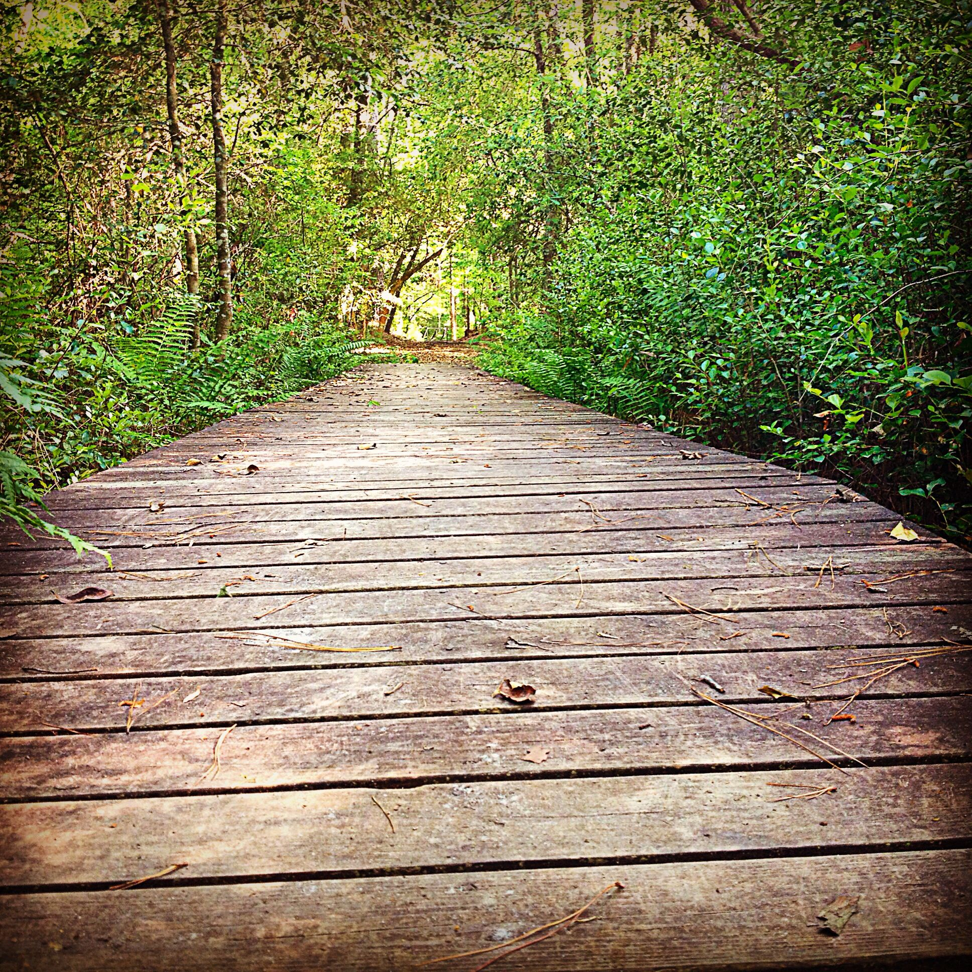Boardwalk at Weymouth Woods