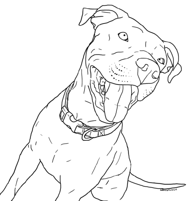 Pitbull Coloring Pages In 2020 Dog Coloring Page Puppy Coloring Pages Animal Coloring Pages