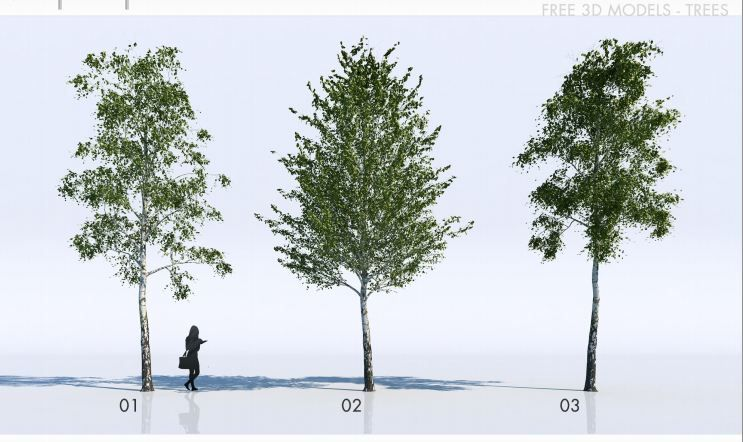 Architecture Drawing Trees free 3d trees models | architectural resources | cutout_plants