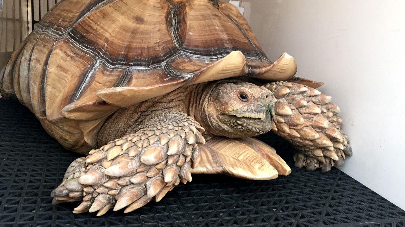 Фото приколы черепахи