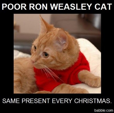 15 Harry Potter Characters...Portrayed by Cats | Babble