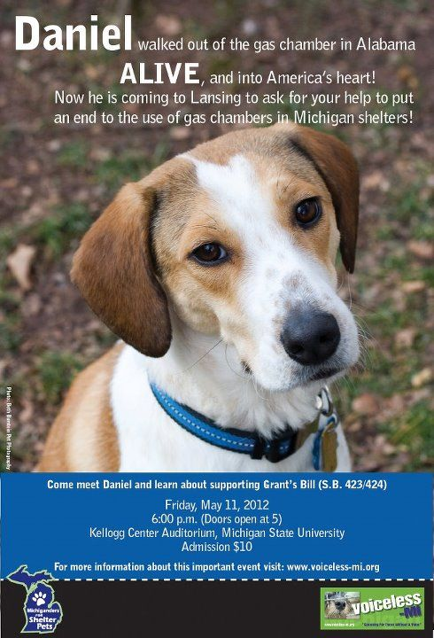 Are You In Michigan Come Meet Daniel The Miracle Beagle Who