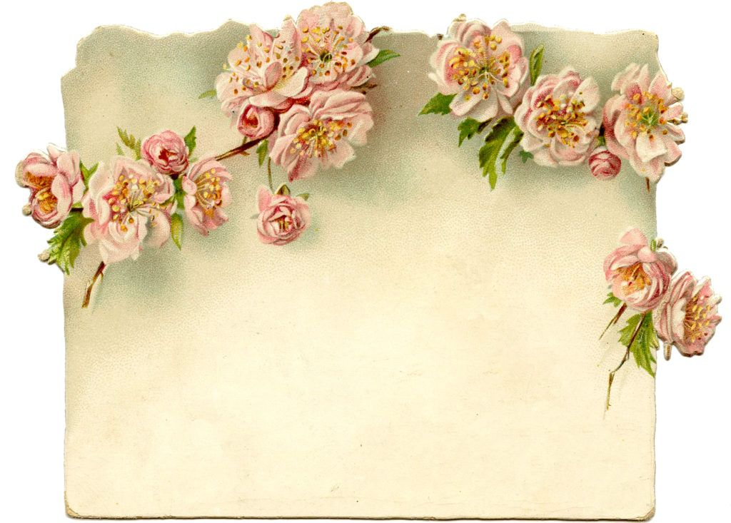 Victorian Trade Card Water Lily Botanical 1870s Scrapbook Victorian Ephemera