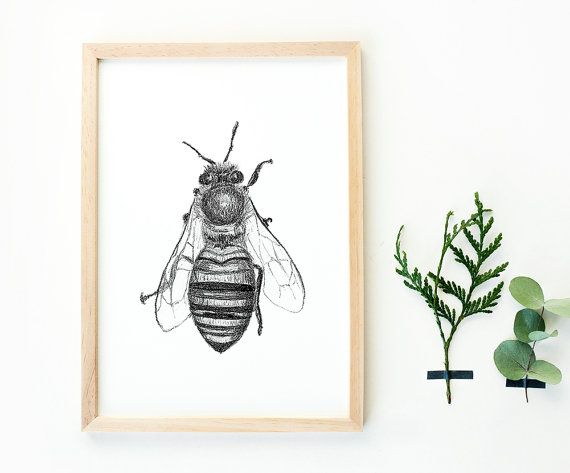 Hand drawn bee art print a4 black and white insects drawing botanical style honeybee bee print home deco nature print animal poster by kuukeluus