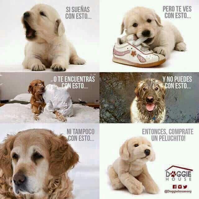 No Al Maltrato Animal Mascotas Animales Y Mascotas Perros