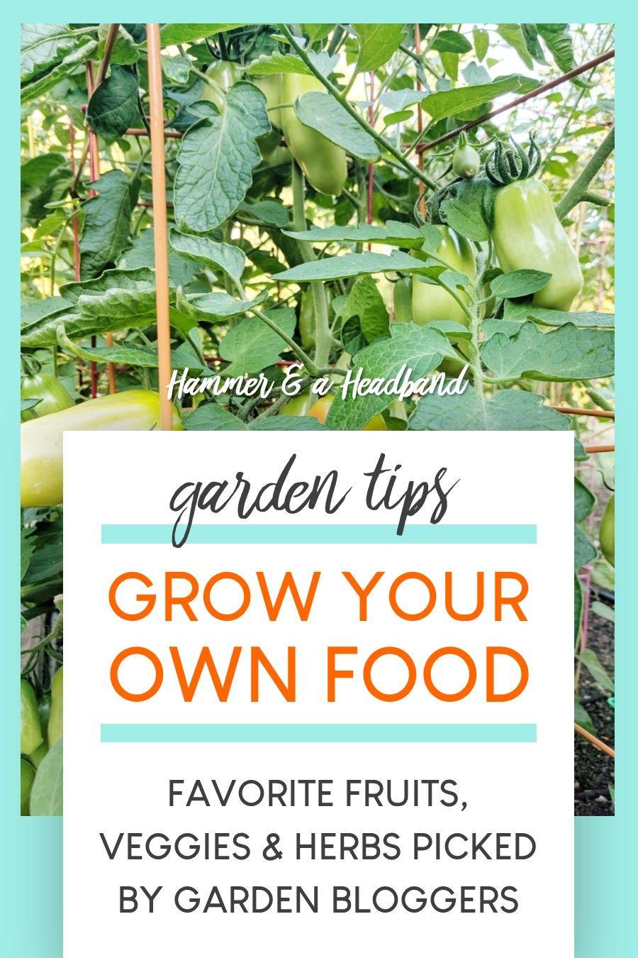 8+ Surprisingly Easy Foods to Grow in Your Garden in 2020
