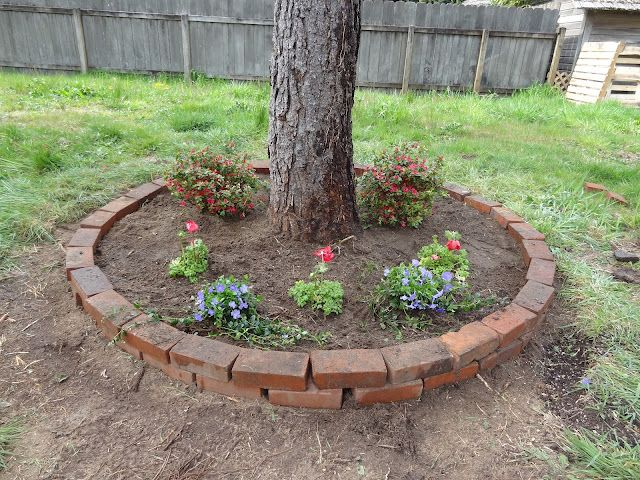 revamp landscape tree base