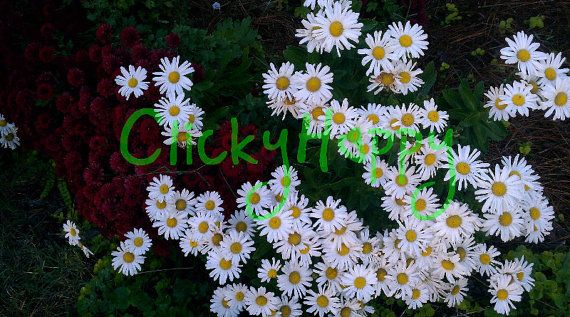#Flowers White #Nature #Photography #DigitalArt by #ClickyHappy #Etsy #Garden #Bright