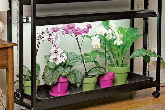 How To Grow Orchids Growing Orchids Orchid Care Gardeners Com In 2020 Growing Orchids Orchids Led Grow Lights