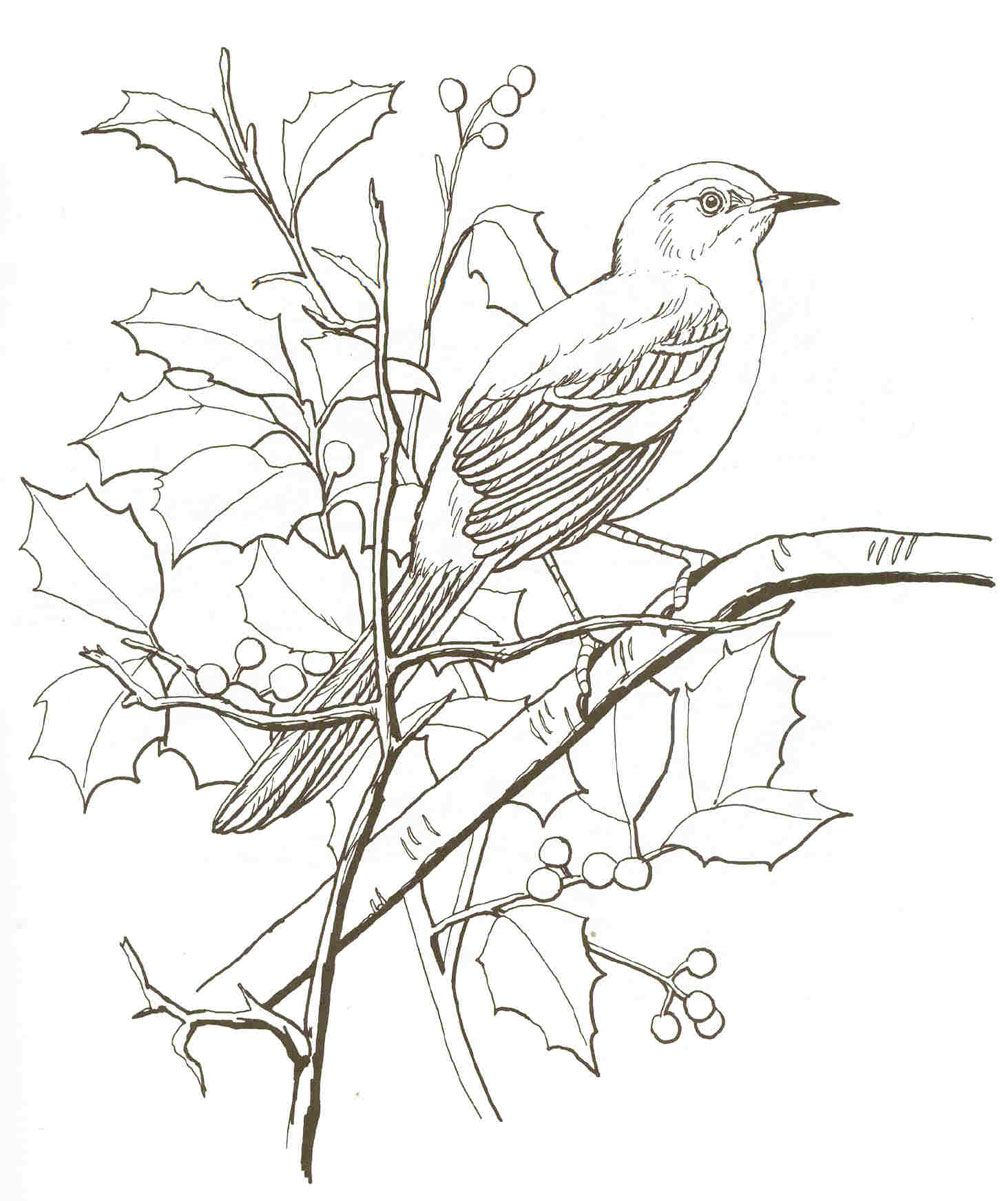 Mockingbird Bird Coloring Pages Bird Drawings Animal Coloring Pages