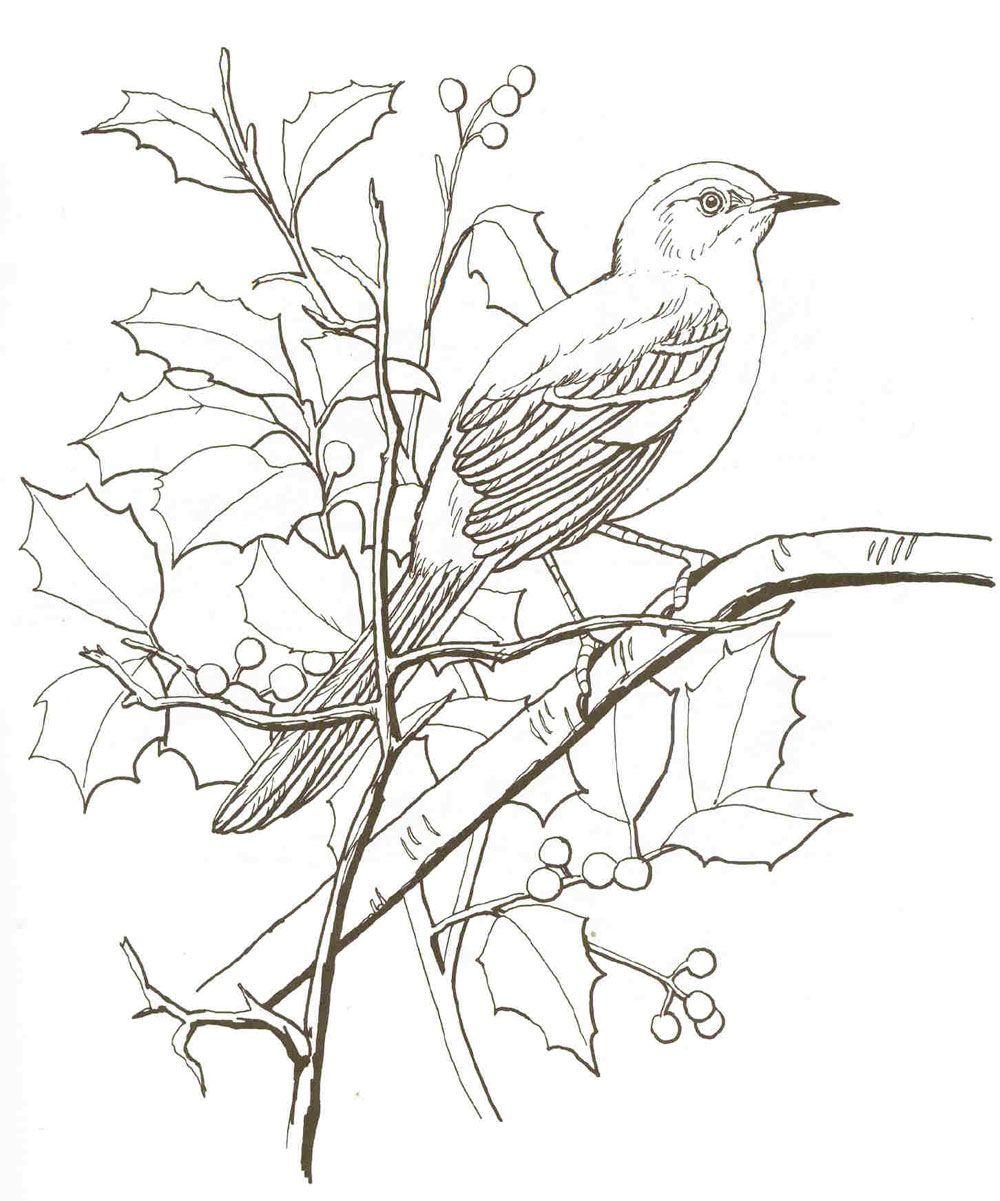 Mockingbird | bitz | Pinterest | Dibujos de pájaro, Dibujos para ...