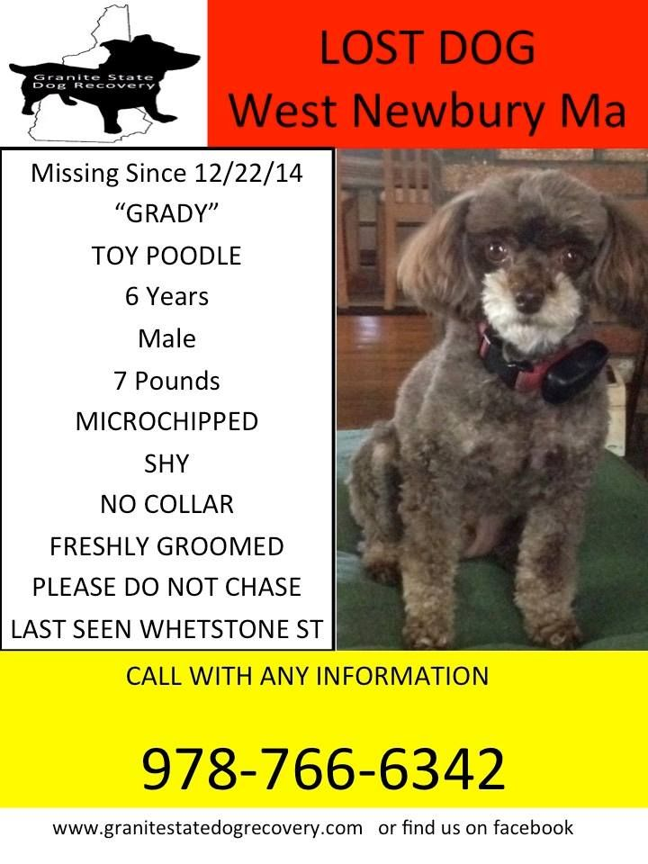 Missing Male Toy Poodle In West Newbury Ma Grady Is 6 Years Old And Weighs 7 Pounds And Was Last Seen In His Yard On Whetsto Losing A Dog Toy Poodle Male Toys