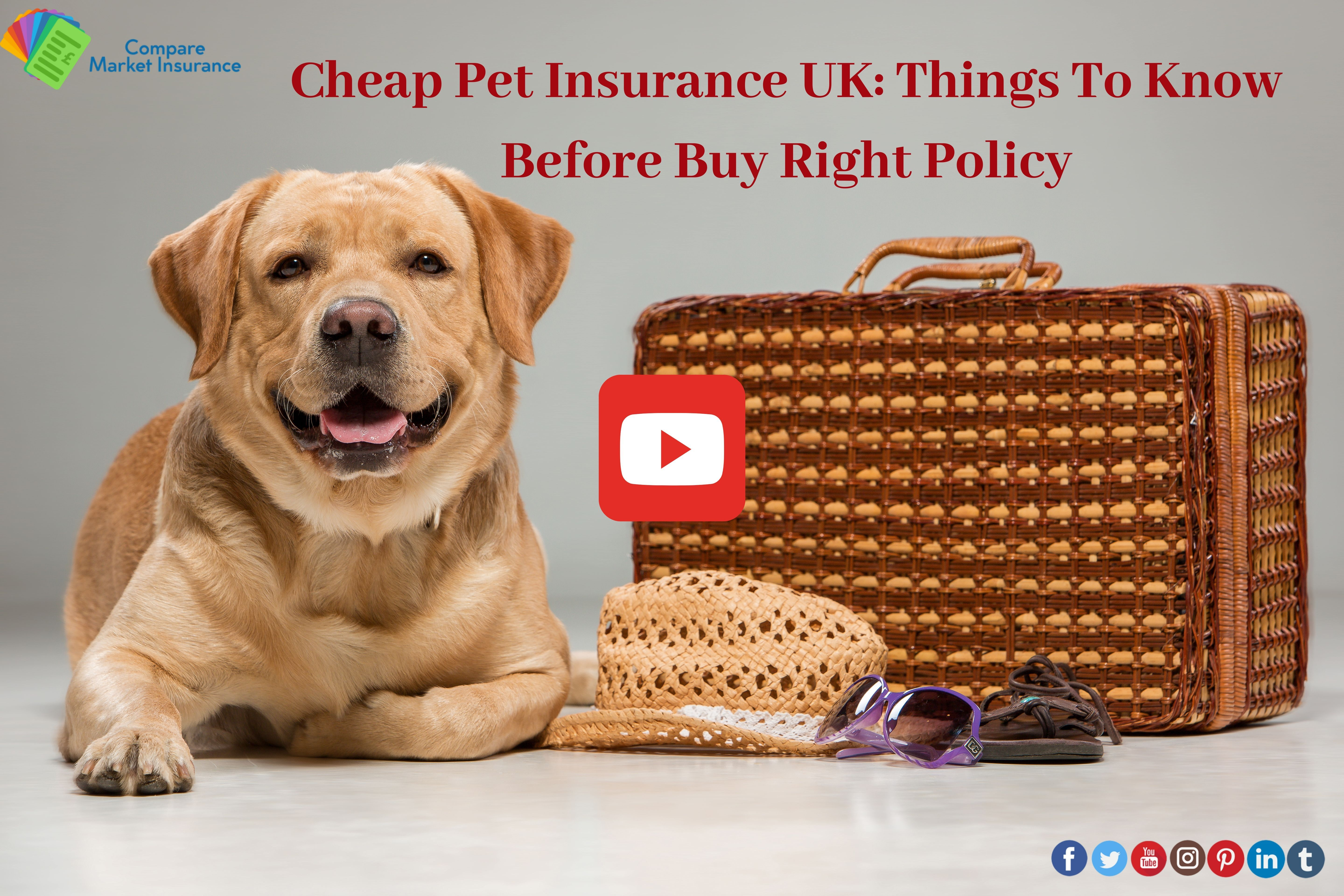 Buy The Insurance Which Is Right For Your Pet And At The Right Deal Comparemarketinsurance Insura In 2020 Compare Insurance Cheap Pet Insurance Cheap Pets
