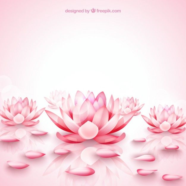 Pink Lotus Flowers Background Free Vector Iphone Wallpapers