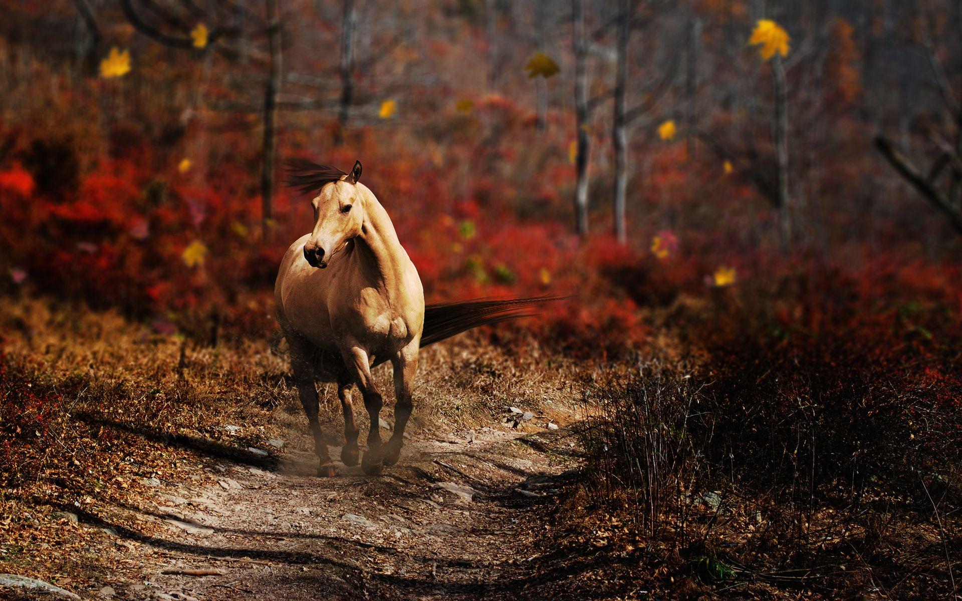 Simple Wallpaper Horse Photography - eb8139d5f1d23e03048989d4bf44026e  Photograph_152118.jpg