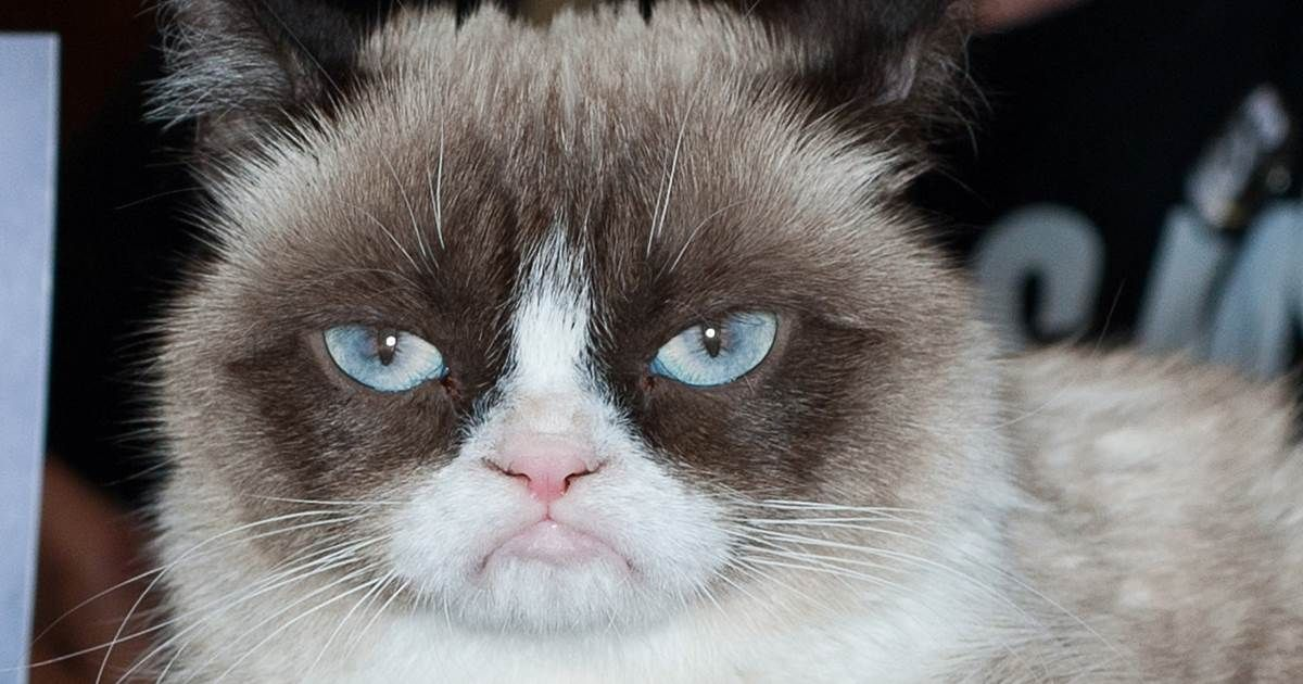 Grumpy Cat, the face of thousands of memes, has