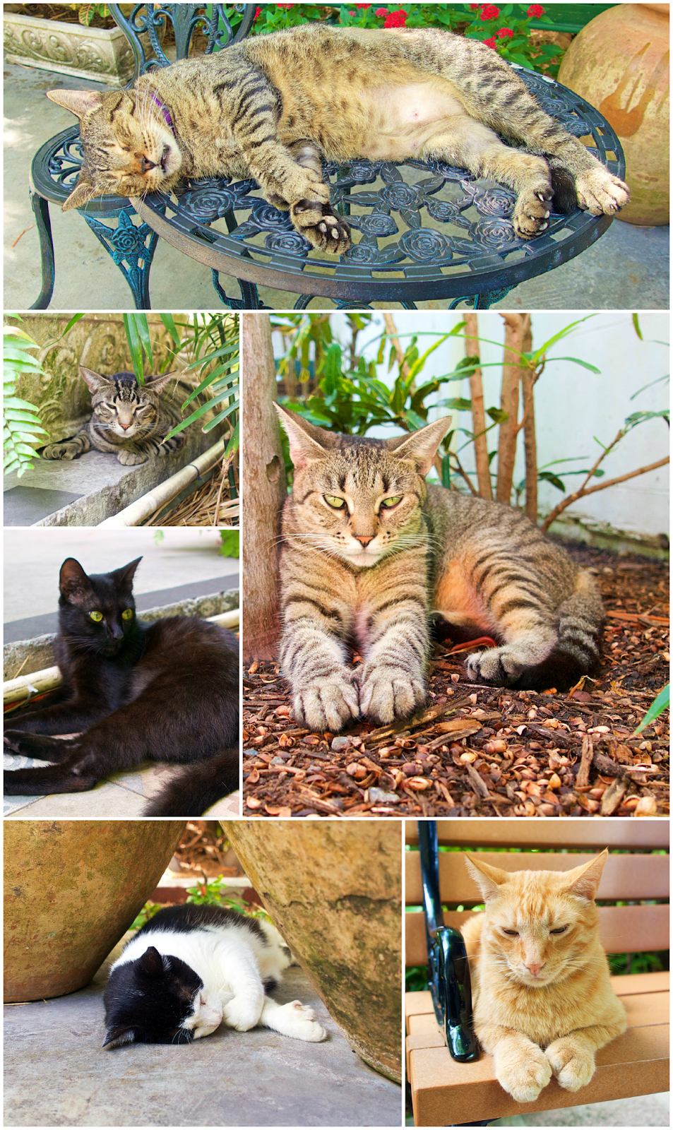 Hemingway Cats with 6 toes Key West, FL Hemingway cats