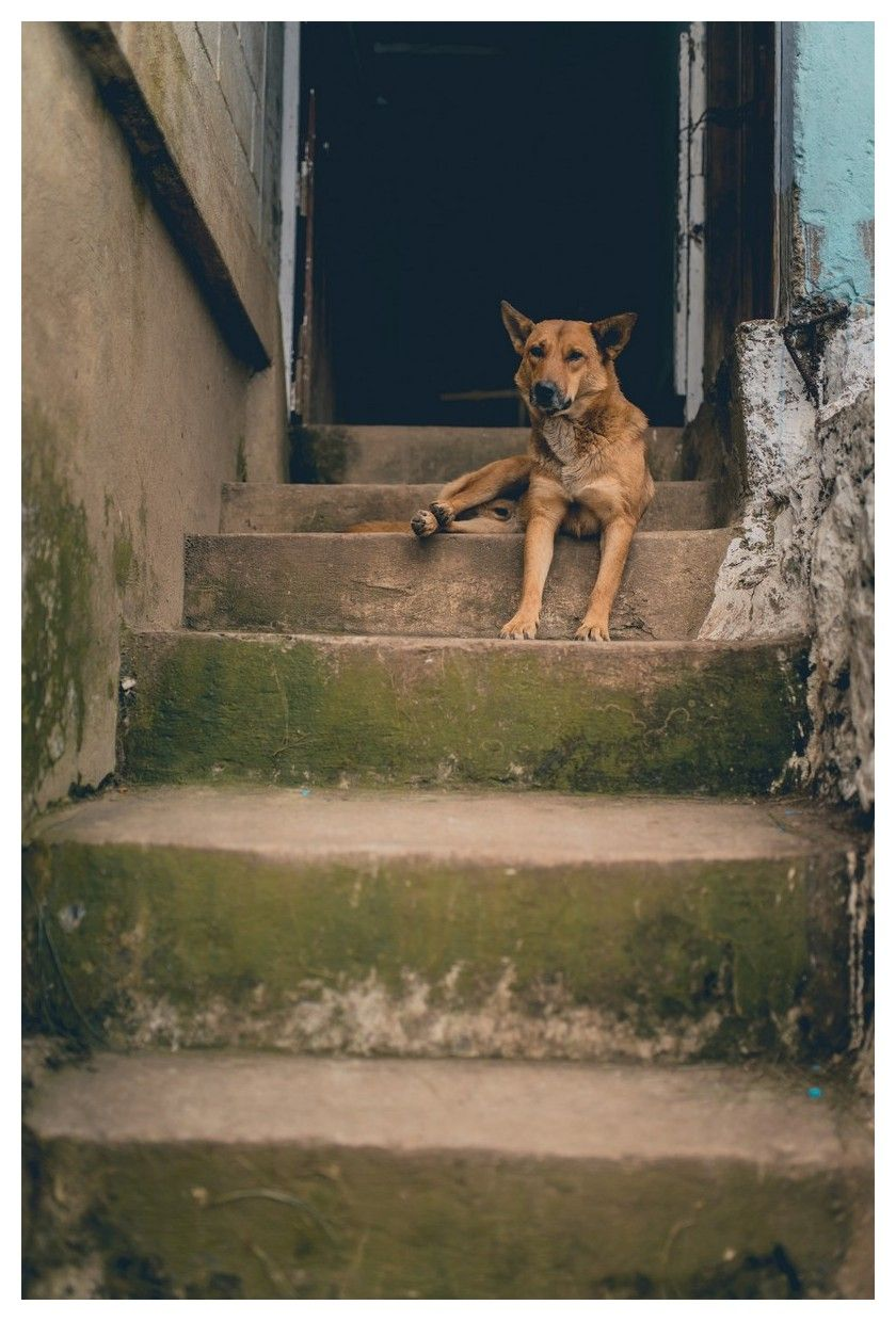 All you have ever wanted to know about dogs with images