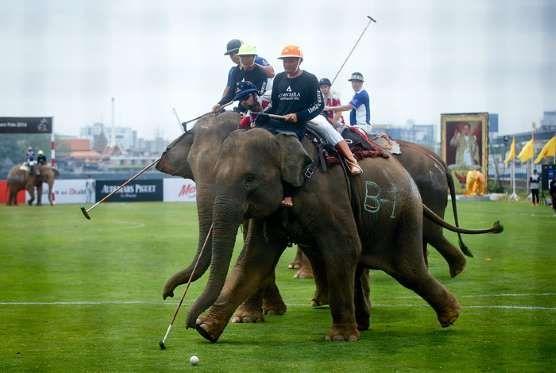 В Таиланде стартовал королевский кубок по поло на слонах ...