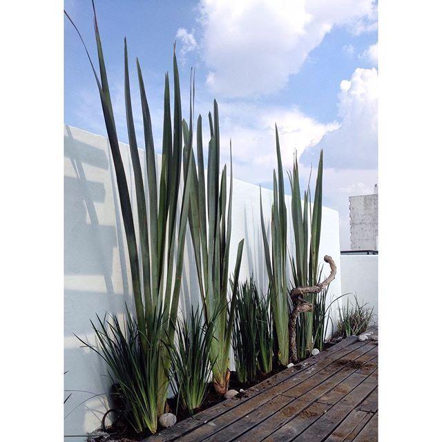 Ideas De Diseño De Jardines Residenciales: Jardineras Para Terraza En Proceso #terraza #rooftop