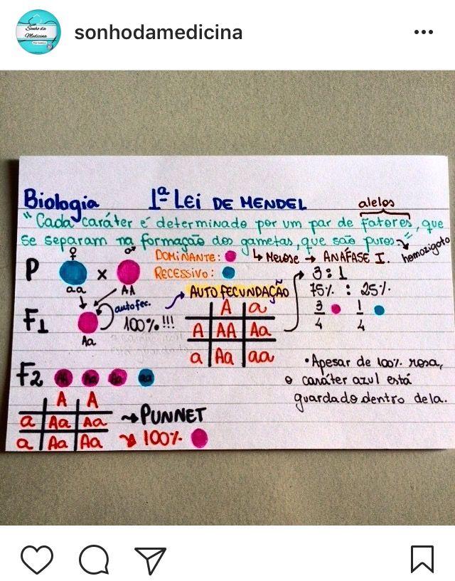 Pin De Marina Maia Em Studies Leis De Mendel Materia De
