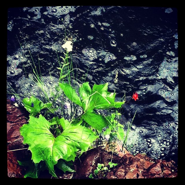 Wild flowers framed by the river