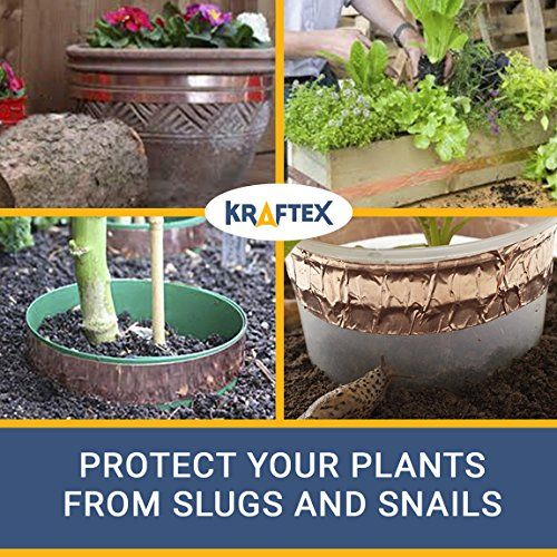 How to Protect Your Garden from Slugs and Snails | Slugs ...