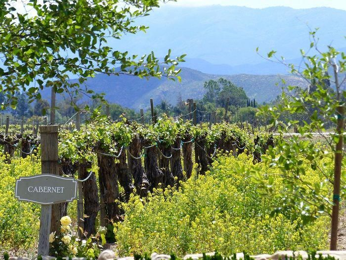 Walk to Ponte Winery when staying at South Coast Winery