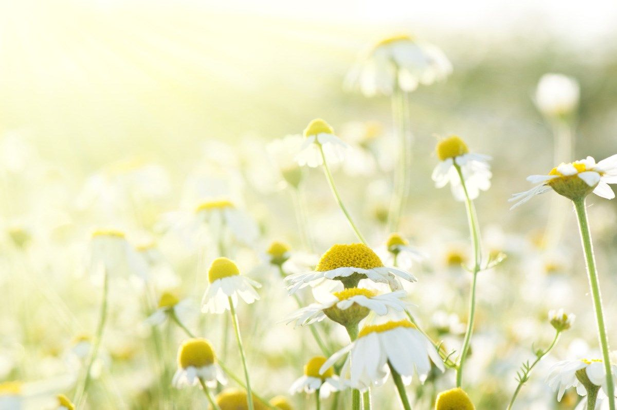 flowers in the Sun Wall Art from Next Wall Stickers | Wallpaper ...