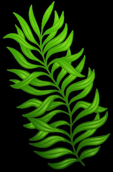 exotic green plant png clipart image flower clip arts pinterest rh pinterest com