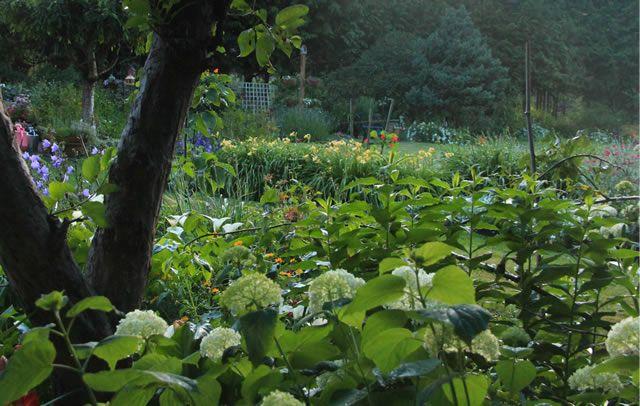 #Adeline #Kong: A Garden as Time Allows | Fine Gardening 3