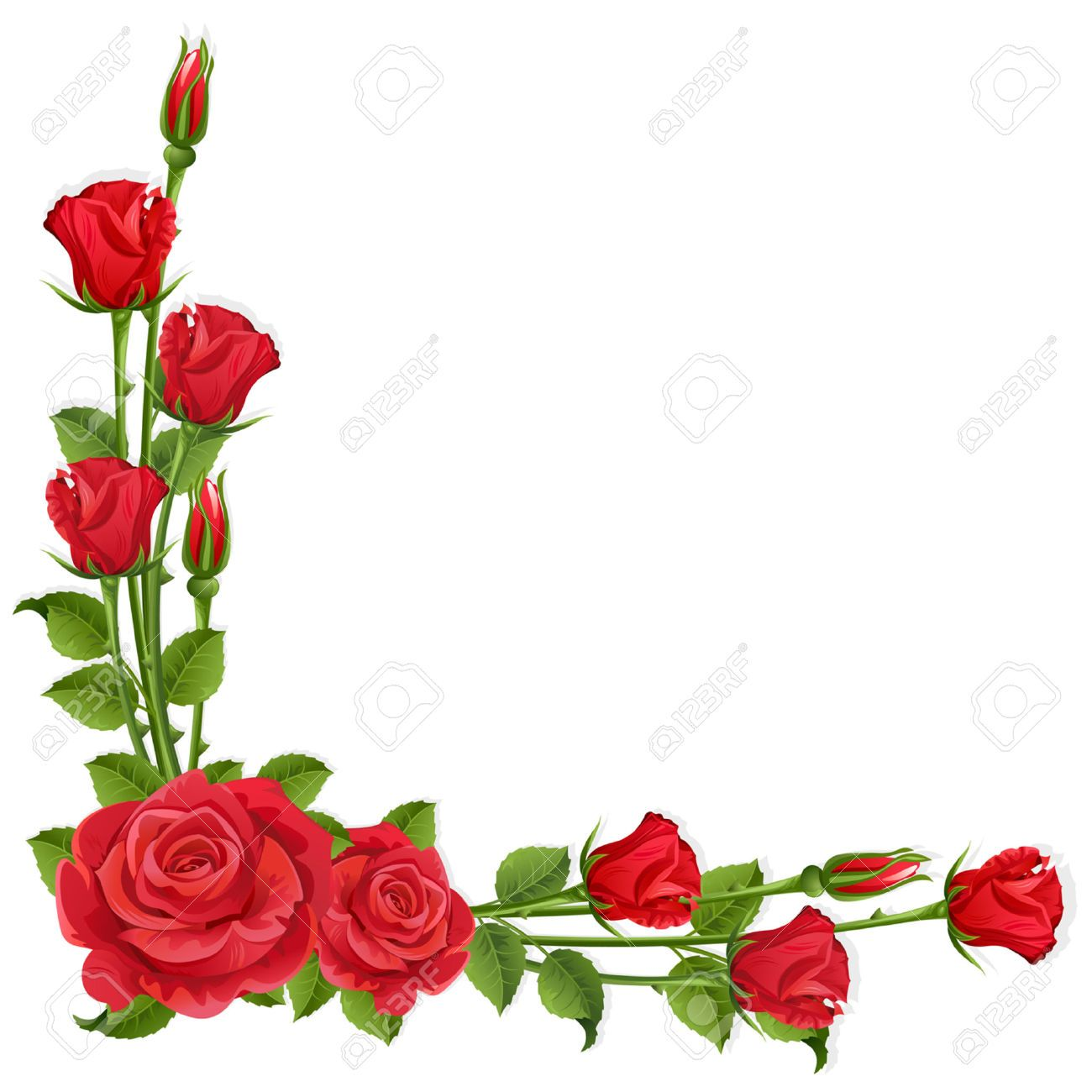 White Background With Red Roses Flower Border Clipart Red Roses Flower Border