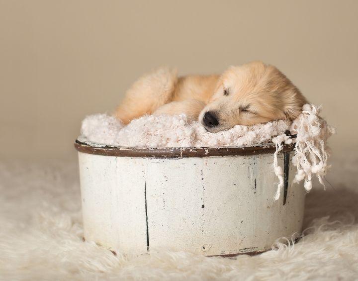 Blaine Mn Newborn And Baby Photographer Newborn Puppies Puppy Photography Puppy Photos