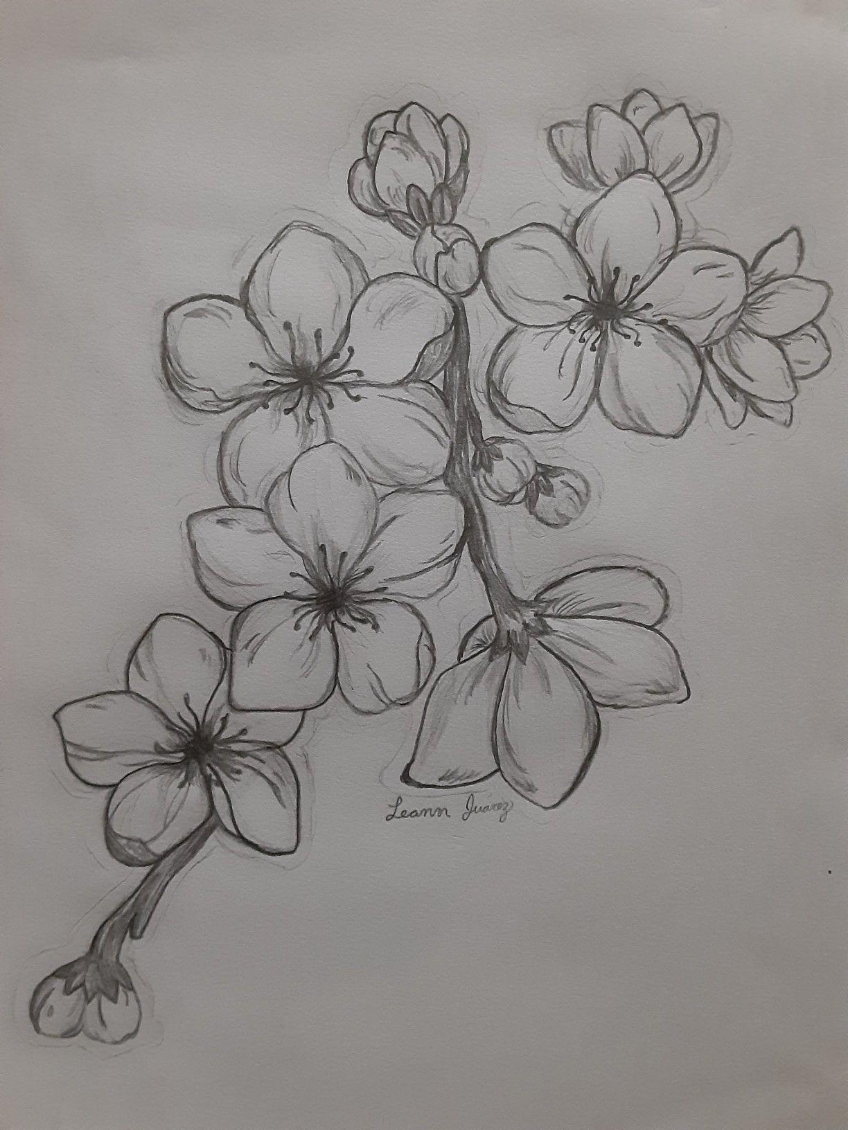 Cherry Blossoms Flower Art Drawing Cherry Blossom Art Cherry Blossom Drawing
