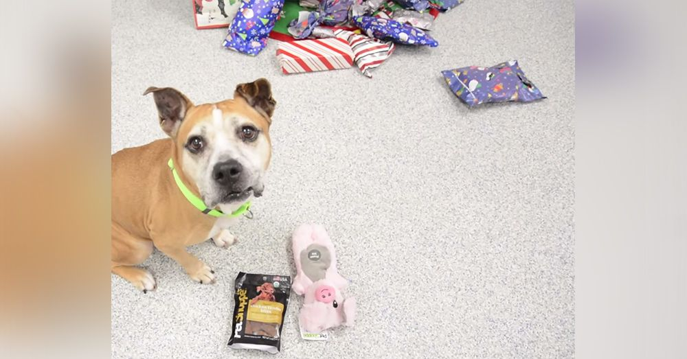 Share The Holiday Cheer As These Pups And Kittens Open Their Gifts With Glee In 2020 Animal Projects Santa Paws Cat Shelter