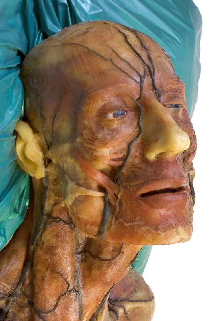 Italian wax facial anatomy | Facial anatomy | Pinterest | Anatomía y ...