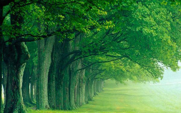 10 خلفيات خضراء رائعة لسطح المكتب عالم الكمبيوتر Green Nature Wallpaper Hd Nature Wallpapers Nature Desktop Wallpaper