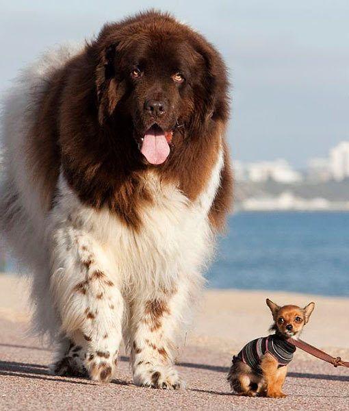 Friends Cute Dogs Dog Friends Dogs
