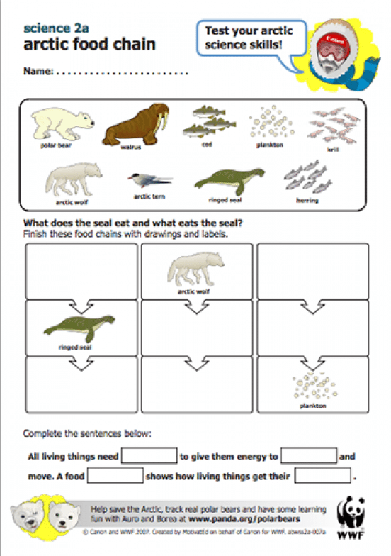 Here S A Wwf Lesson Plan On Arctic Food Chains Sciencepenguin Science Penguin Food Chains Science Skills Arctic Teaching Science