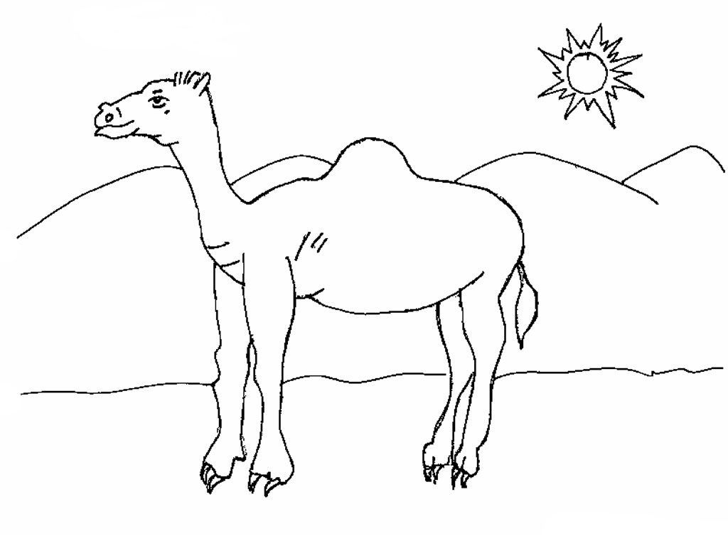 Desert Coloring Pages Animal Coloring Pages Coloring Pages For