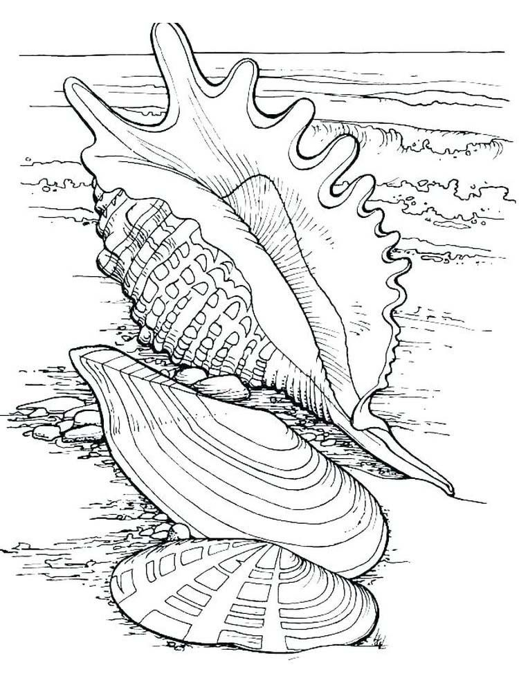Printable Seashell Coloring Page Coloring Pages Coloring Books