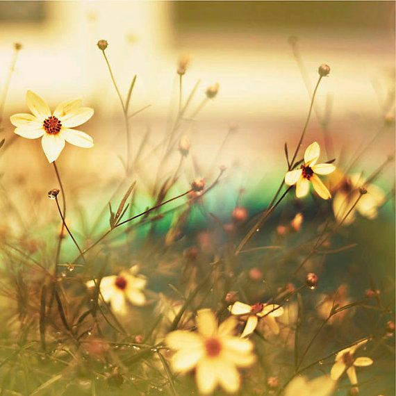 Yellow Flower Photograph, Spring, Wall decor, garden, Lemon, green ...