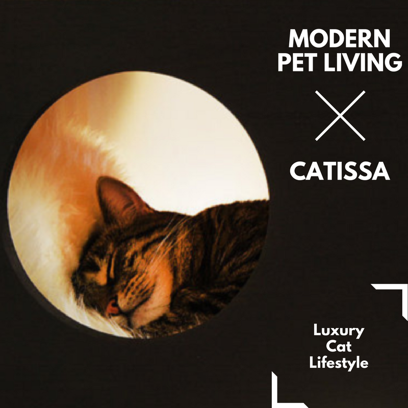 Modern Pet Living X Catissa Luxury Cat Lifestyle Cat Cats Catproducts Catlove Cathealth Catlifestyle Catfurn Modern Pet Luxury Cat Cat Life