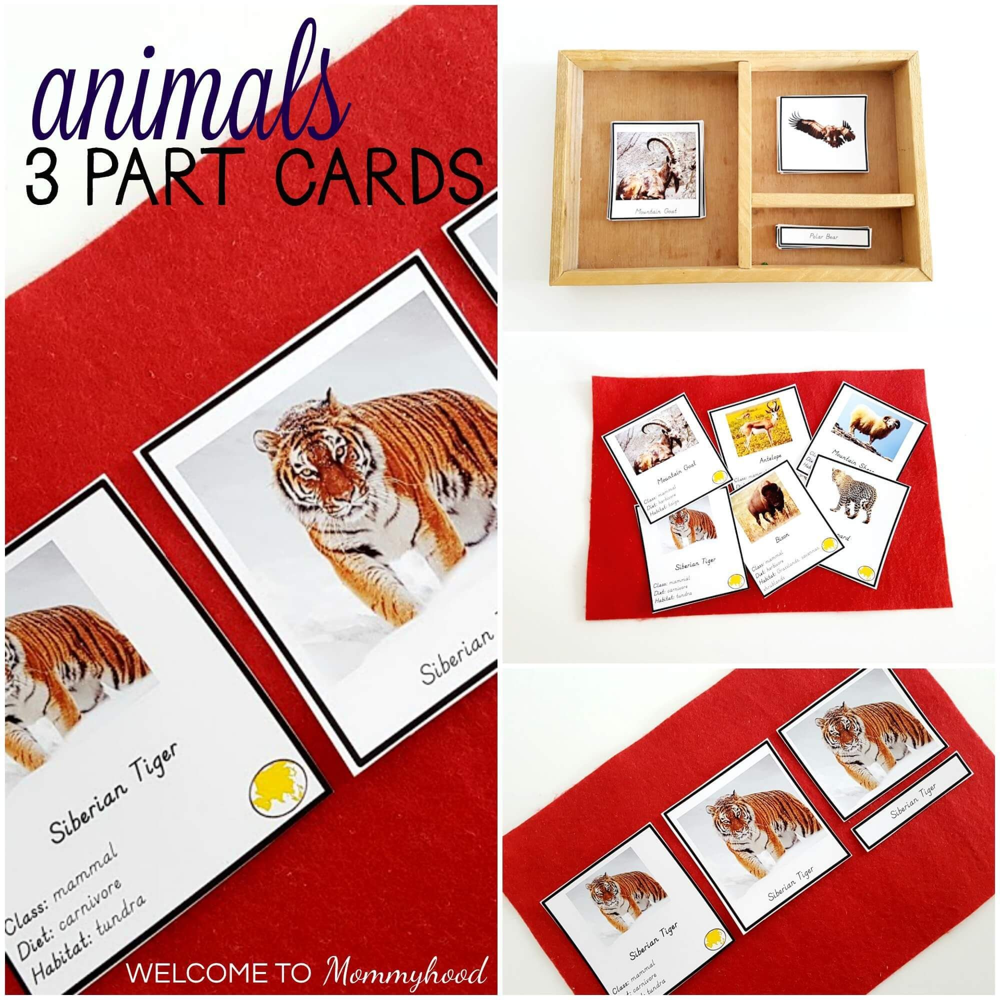 Introduction To Russia Printables Hands On Montessori