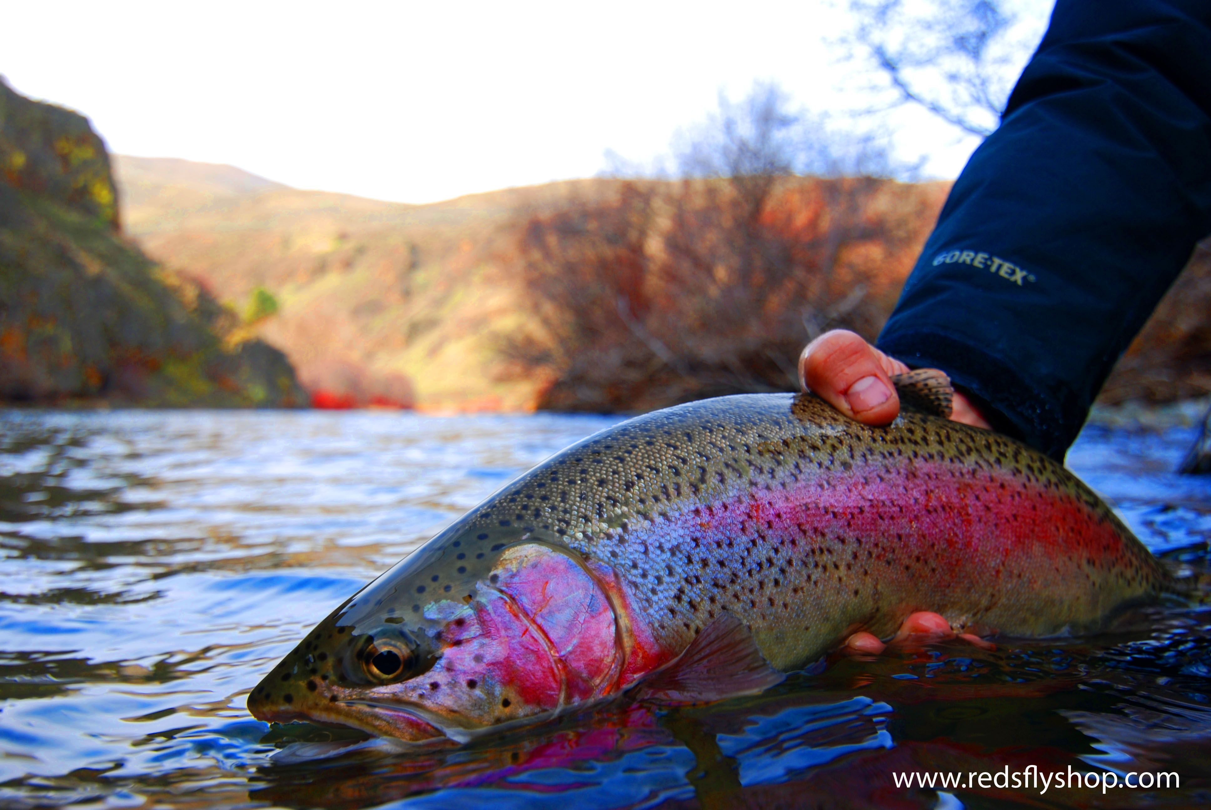 Yakima River Canyon Is Considered One Of The Nation S Top Ten Rainbow Trout Fishing Spots Or So I Was Told Fly Fishing Flies Trout Rainbow Trout Fishing Fish