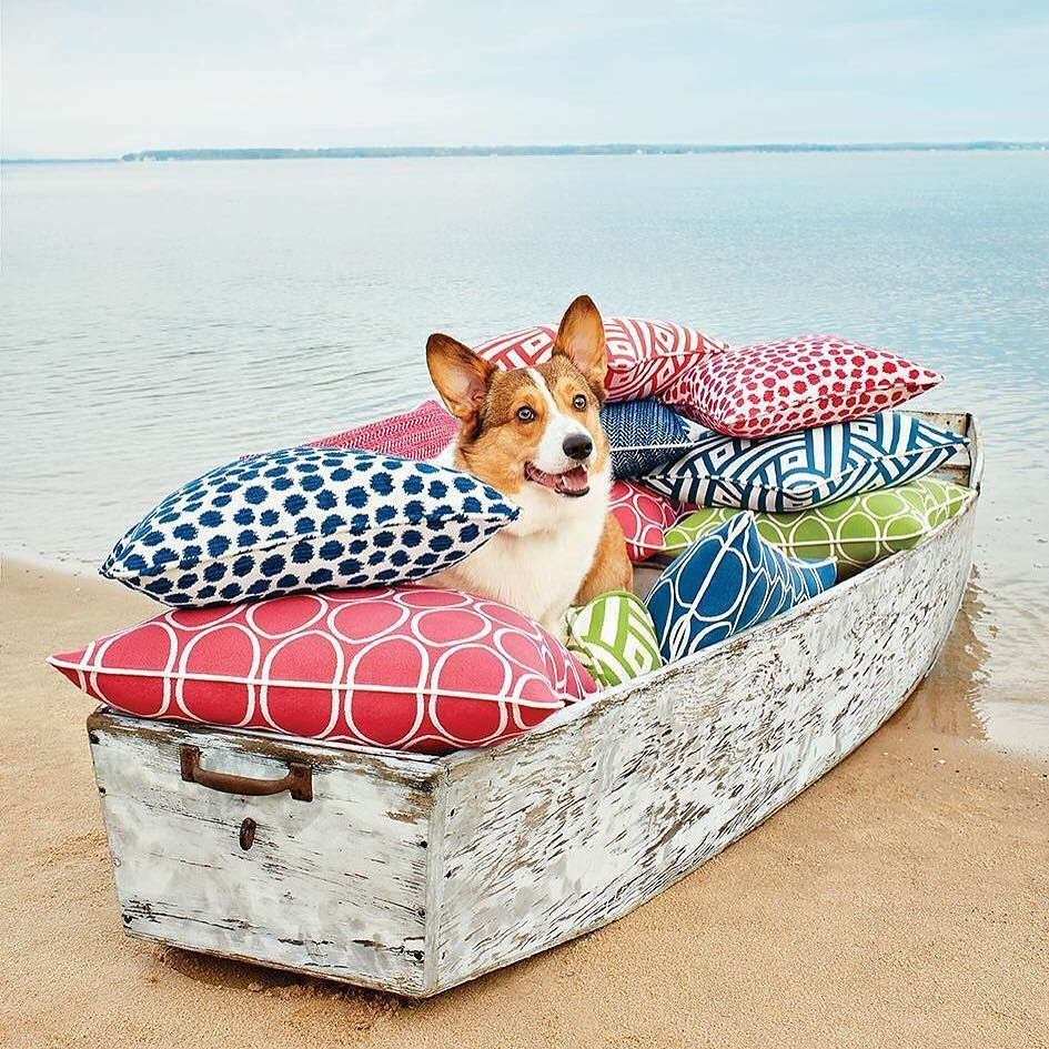 We've saved the best shot for last! Augie the Corgi's contagious smile says it all -- @sunbrella fabrics make us happy! View the entire Calypso collection on our website. Link in our profile! by thibaut_1886