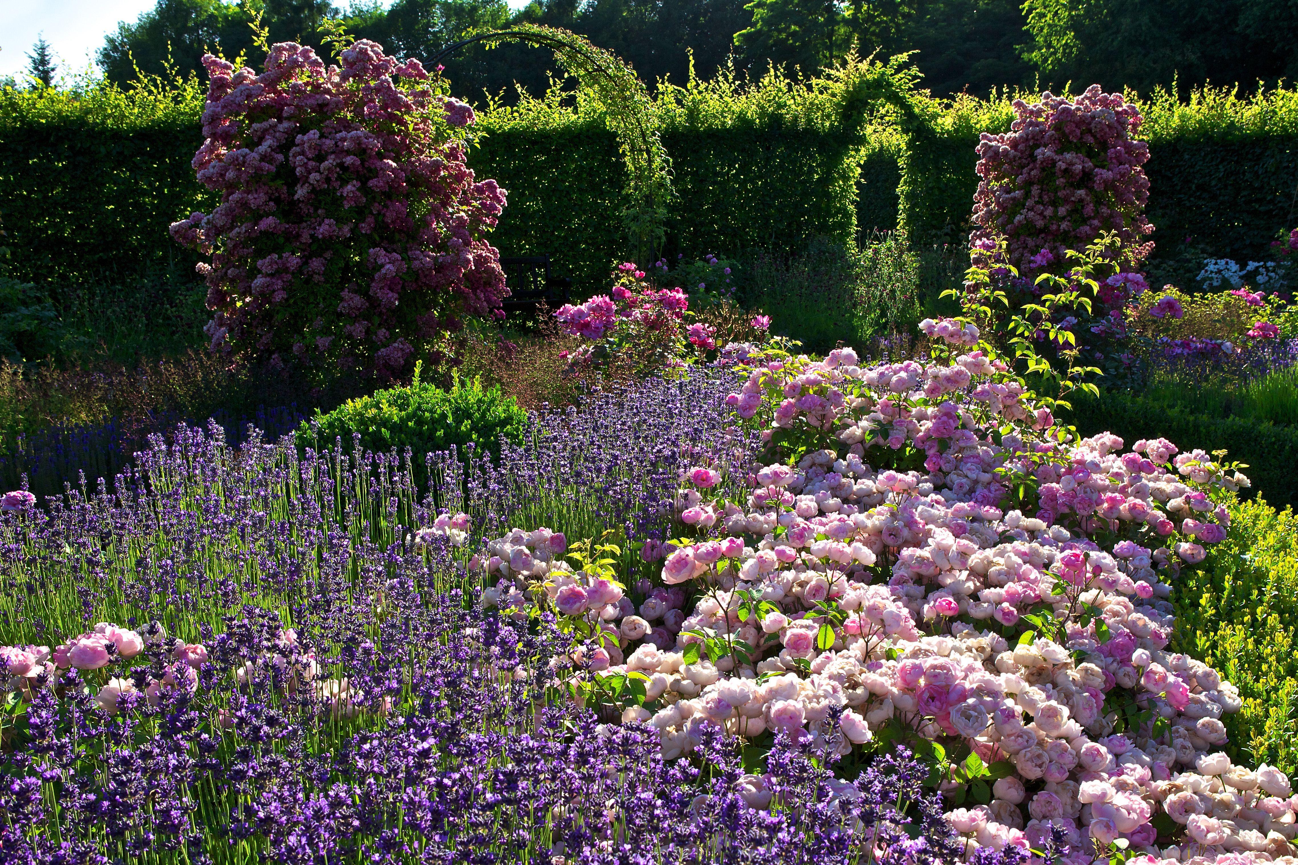 Luxury rose Rosengarten Zweibr cken Google