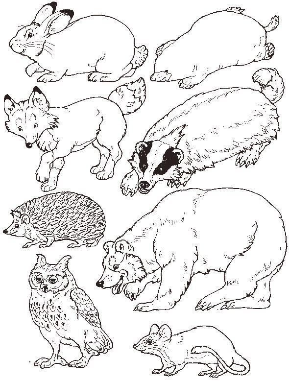 For Jan Brett S Mitten Put The Animals In The Mitten Winter Preschool Winter Kindergarten Mitten
