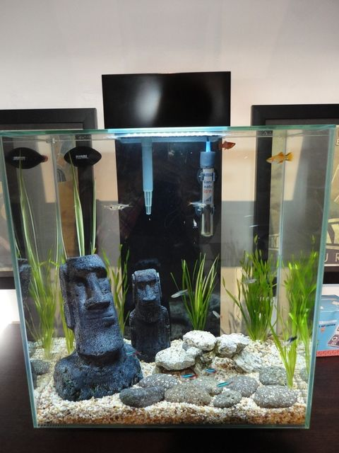 fluval edge with sand - Google Search | Fish tank ...