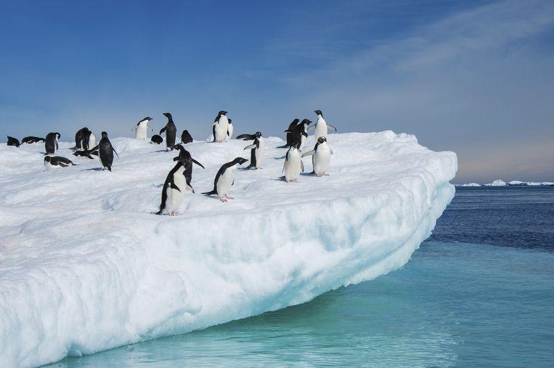 7 Animales Que Solo Podrias Ver En La Antartida Viajes Y Turismo Antartida Viajes